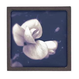 白黒のクロッカスの花の花 ギフトボックス