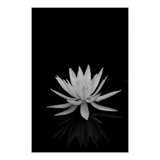 白黒のスイレン ポスター
