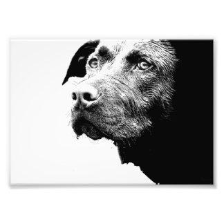 白黒のチョコレート実験室ピットの組合せ犬 フォトプリント