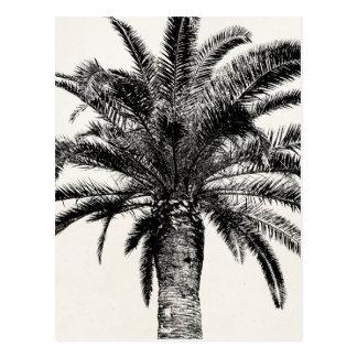 白黒のレトロの熱帯島のヤシの木 はがき