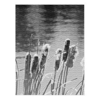 白黒の池によるネコヤナギ ポストカード