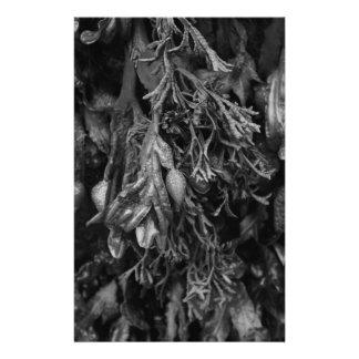 白黒の海藻。 便箋