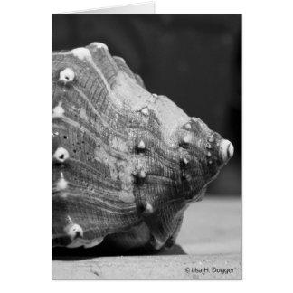 白黒の灰色の貝 カード
