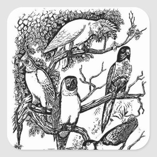 白黒の熱帯鳥のヴィンテージのステッカー スクエアシール