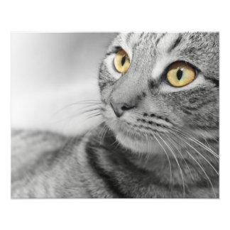 白黒の金ゴールドの目を持つ虎猫CAT フォトプリント