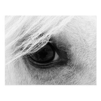 白黒の馬の目 ポストカード
