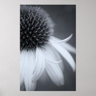 白黒のConeflower ポスター