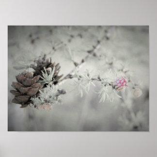 白黒カラマツのピンクの花 ポスター