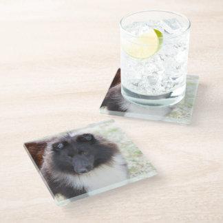 白黒シェットランド・シープドッグ ガラスコースター