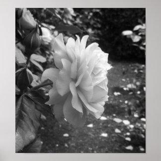 白黒バラの写真撮影 ポスター