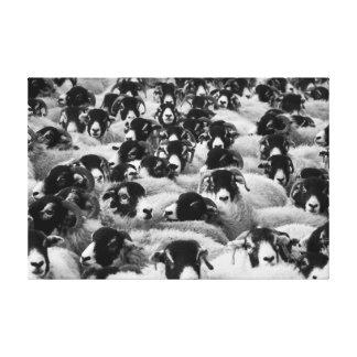 白黒ヒツジの群 キャンバスプリント