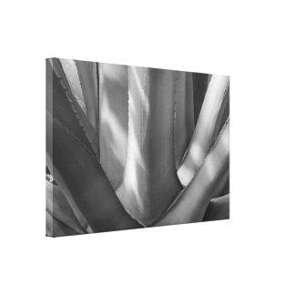 白黒リュウゼツランの植物 キャンバスプリント