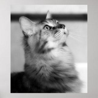 白黒写真のメインのあらいぐまの子ネコ ポスター