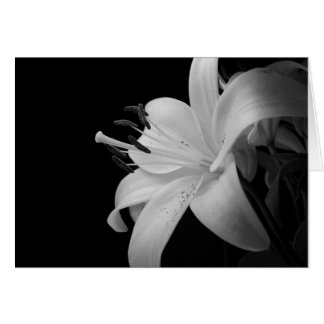 白黒写真 カード