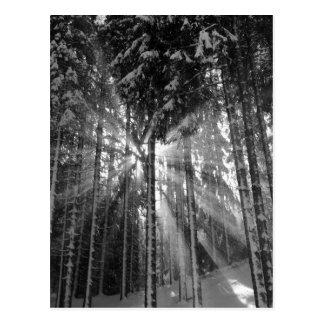 白黒冬の不思議の国 ポストカード
