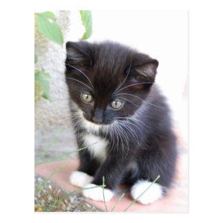 白黒子ネコ ポストカード