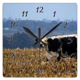 白黒牛は新たに耕された分野で牧草を食べます スクエア壁時計