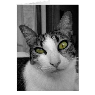 白黒猫の写真 グリーティングカード