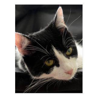白黒猫の顔の写真 ポストカード