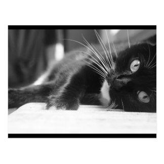 白黒猫 ポストカード
