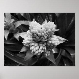 白黒花の写真 プリント