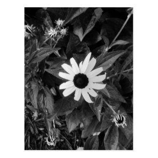 白黒花園 ポストカード