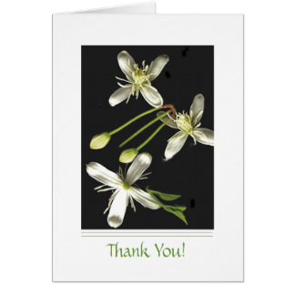 白黒花 カード