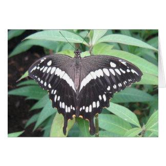 白黒蝶 カード