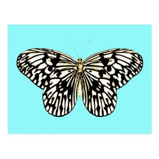 白黒蝶、ターコイズの背景 ポストカード