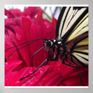 白黒蝶 ポスター