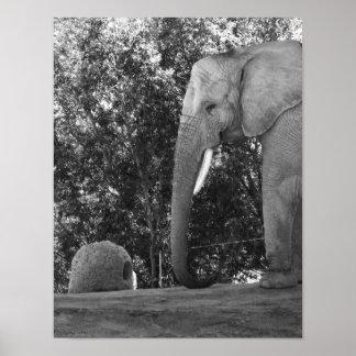 白黒象の写真 ポスター