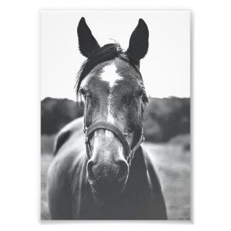 白黒馬のポートレートのプリント フォトプリント