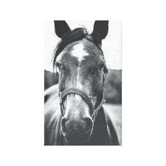 白黒馬のポートレートの写真のキャンバスのプリント キャンバスプリント