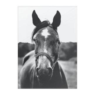 白黒馬のポートレートの写真のプリント アクリルウォールアート