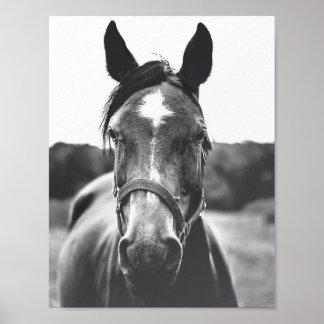白黒馬のポートレートの写真ポスター ポスター