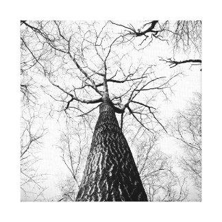 白黒高い木の森林 キャンバスプリント