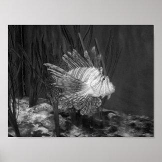 白黒魚の写真 プリント