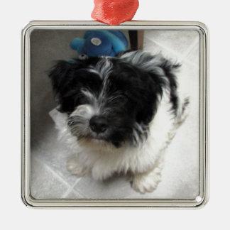 白黒Havaneseの救助の子犬 メタルオーナメント