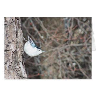 白breasted精神病院 カード