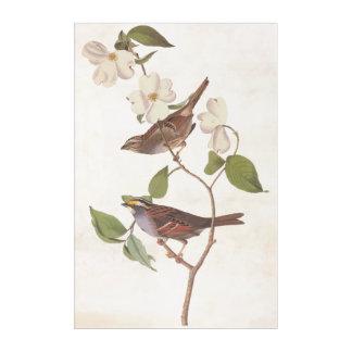 白Throatedすずめの鳥のAudubonのヴィンテージの芸術 アクリルウォールアート