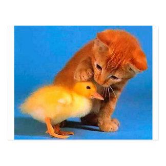 皆が猫である場合もありません。 ポストカード