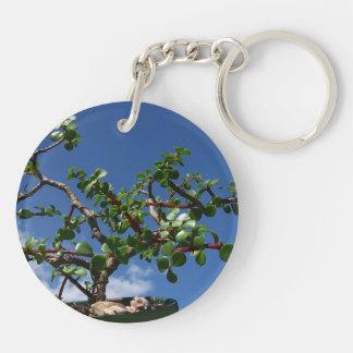 盆栽のportulacariaのafraの木1 キーホルダー