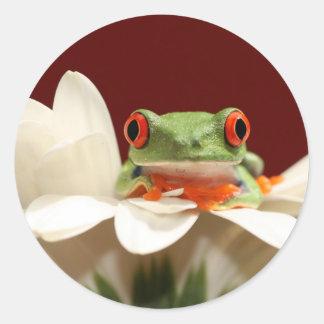 目が赤いアマガエル ラウンドシール