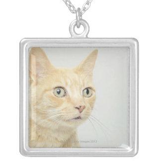 目を持つ猫は広く開きます シルバープレートネックレス