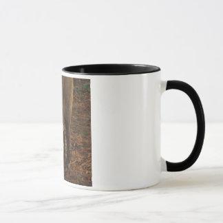 盲目のブタ マグカップ