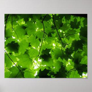 真夏の森林ポスター ポスター