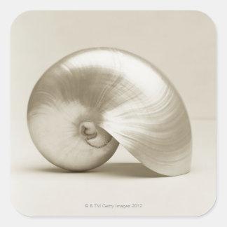 真珠色のオウムガイの海の貝 スクエアシール