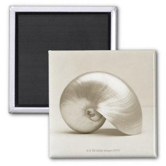 真珠色のオウムガイの海の貝 マグネット