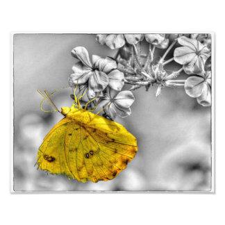 眠いオレンジ蝶破裂音 フォトプリント