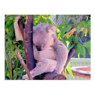眠いコアラ ポストカード